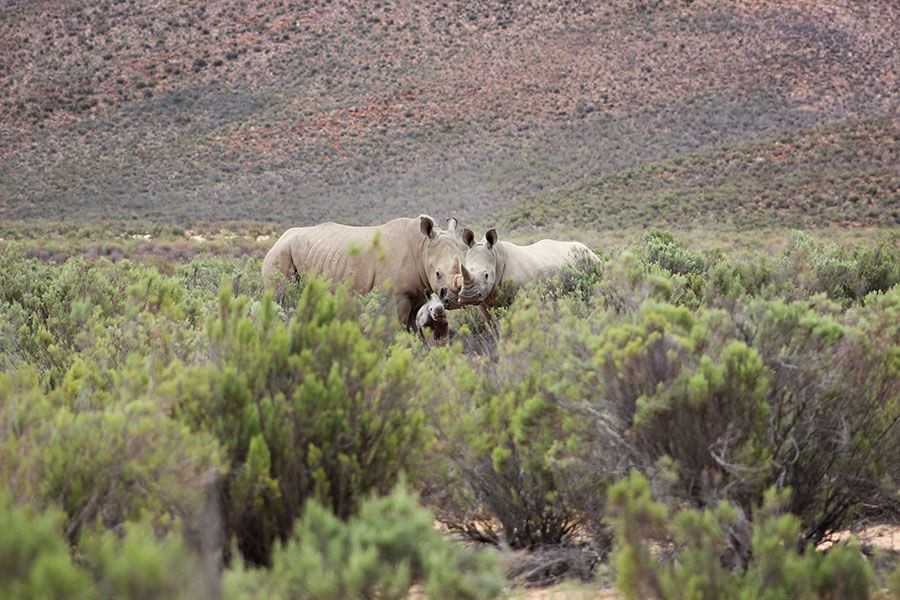 Utter Surprise as Aquila Welcome yet another Rhino Calf