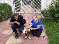 Linda Goodenough from Fidelity ADT with Fox Security and one of the adventuring Bassets from Brackendowns.